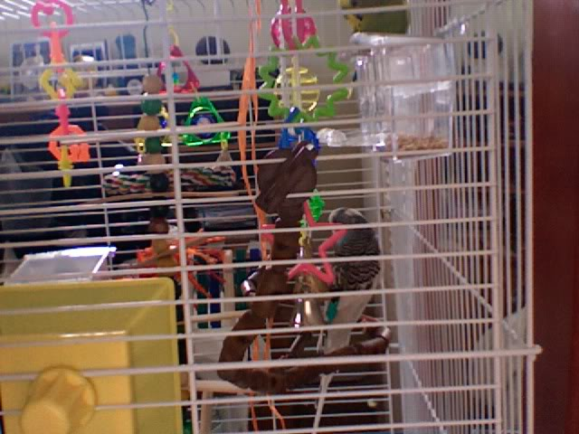 ma cage aujourd'hui ! Photo232
