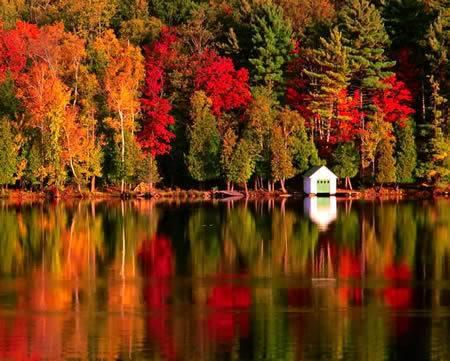 Slike za danas - Page 2 Autumn_leaves