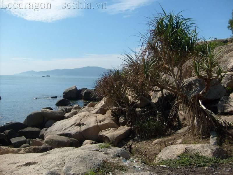 Thành phố biển Nha Trang - Ảnh cây nhà lá vườn S6300422