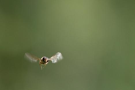 Los rods, ¿son seres de otra dimensión? No, son bichos Bug-in-flight