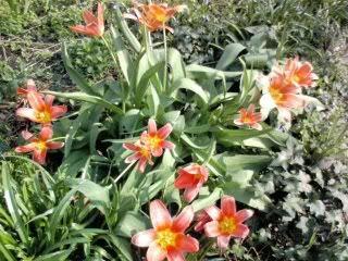 சேனையை அலங்கரிக்கும் பூக்கள் 02 - Page 18 Flowers