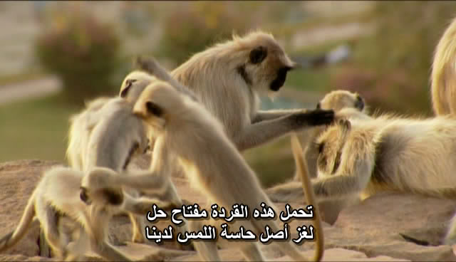 BBC - Human Senses BBCHumanSenses010