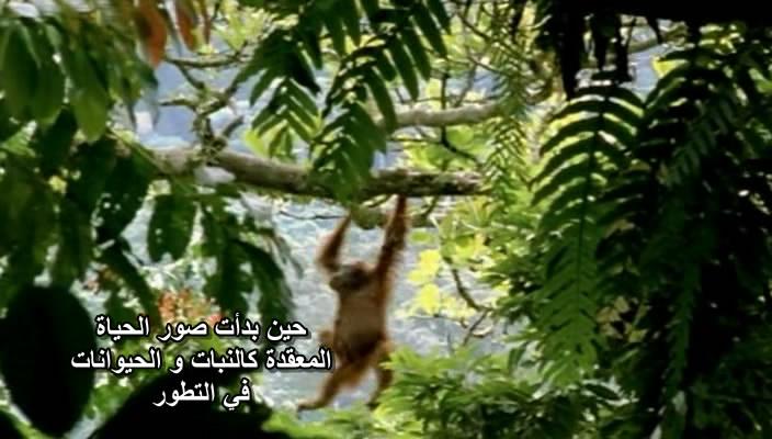 BBC Horizon - Why Do Viruses Kill (2010) Docu Viruses06