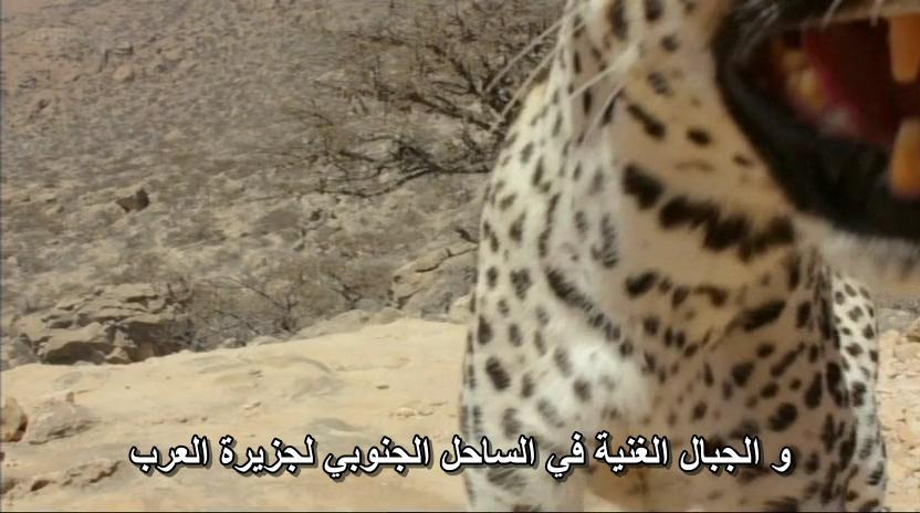 BBC - Wild Arabia (2013) Alexander Siddig WildArabia1-07