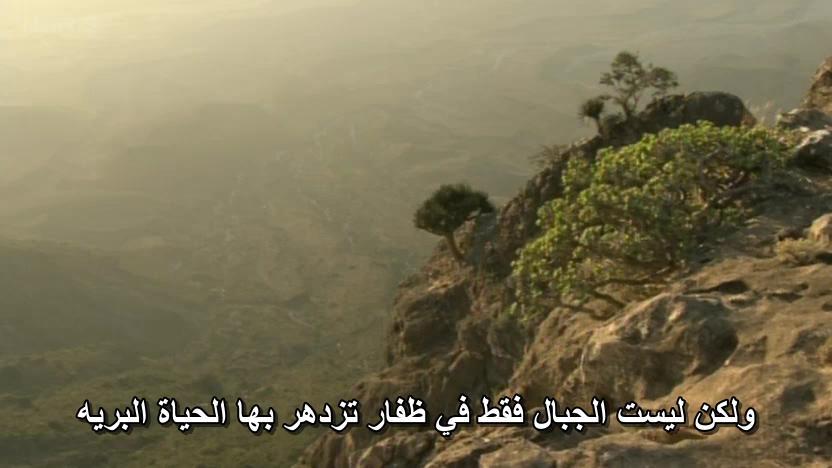 BBC - Wild Arabia (2013) Alexander Siddig WildArabia2-03