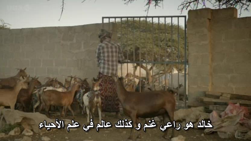 BBC - Wild Arabia (2013) Alexander Siddig WildArabia2-05