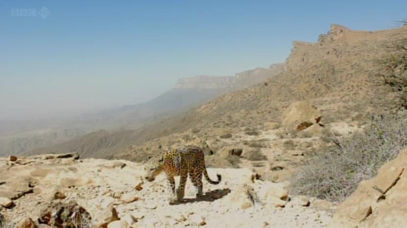 BBC - Wild Arabia (2013) Alexander Siddig WildArabia2-07
