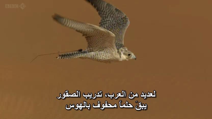 BBC - Wild Arabia (2013) Alexander Siddig WildArabia3-03