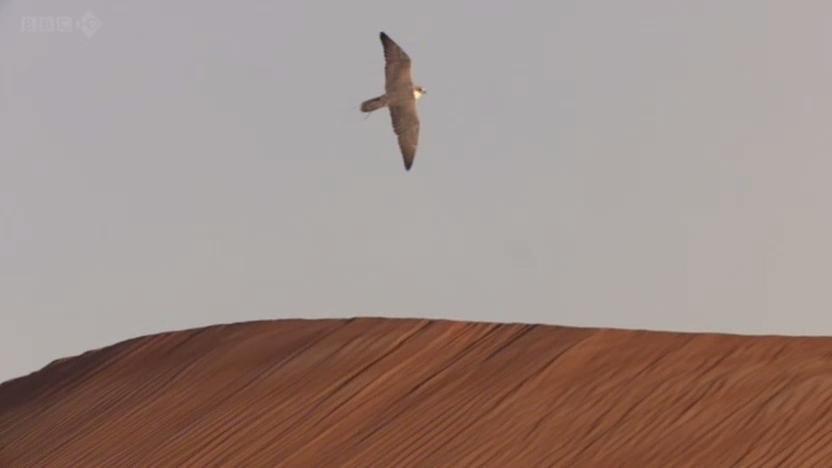 BBC - Wild Arabia (2013) Alexander Siddig WildArabia3-04