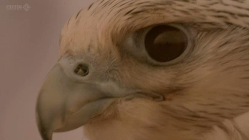 BBC - Wild Arabia (2013) Alexander Siddig WildArabia3-07