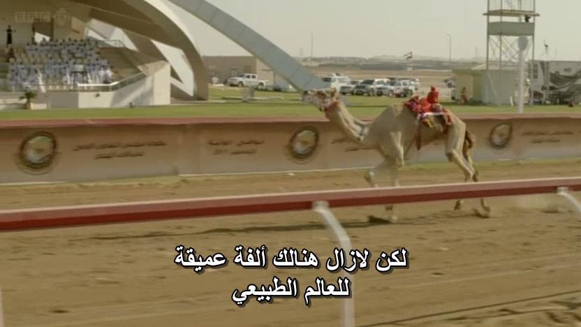 BBC - Wild Arabia (2013) Alexander Siddig WildArabia3-12