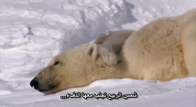 BBC : Planet Earth Snapshot20090402221713