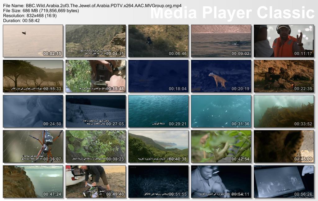 BBC - Wild Arabia (2013) Alexander Siddig Thumbs-WildArabiaEpi2