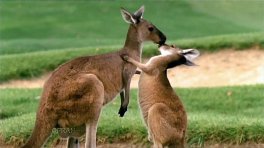 Oprah's Ultimate Australian Adventure  Australia-1-002