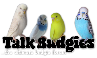Budgie Forum