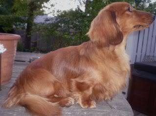 Newest AKC Champion Ozo's Manmar Tides In Dirt's Out at Largh Pah ML! - Page 2 Stevie