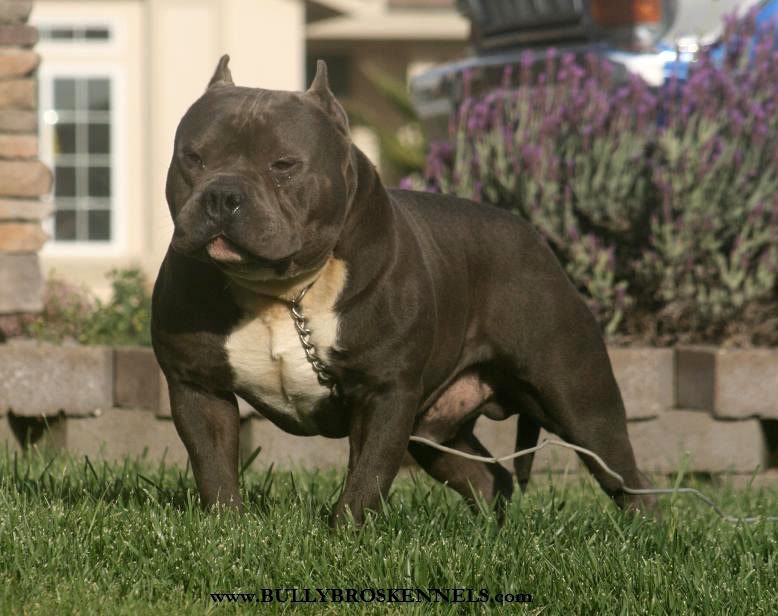 ~~~~~ Toxic x Jellybean daughter lookin for a stud!! ~~~~~ 15mnths3