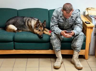 Military dog comes home from Iraq traumatized Dog