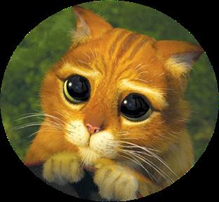 Miaou Miaou Chat_potte4