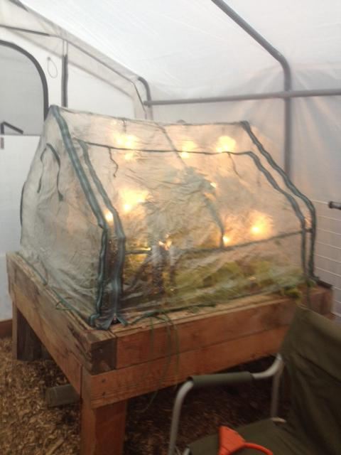 New Here, Need Info Sunglo Greenhouse! 12-5-13C_zpse12655d4