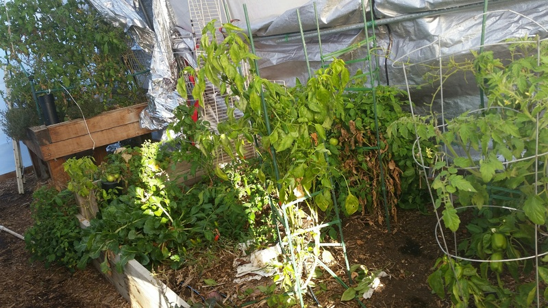 The Winter Journey and greenhouse plastic  - Page 9 20151117_075258_resized_zpspeyic4ie