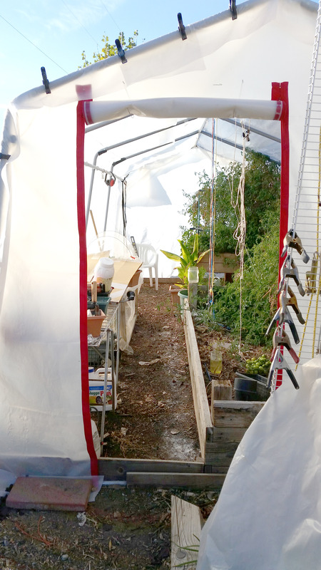 The Winter Journey and greenhouse plastic  - Page 13 20161118_150047_zpsyklskl1l