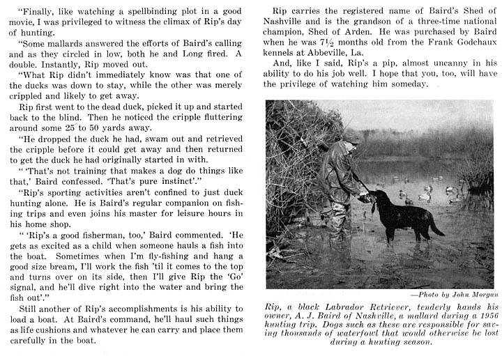 The BEST of Walking Horse Trivia! - Page 26 Retrievers3