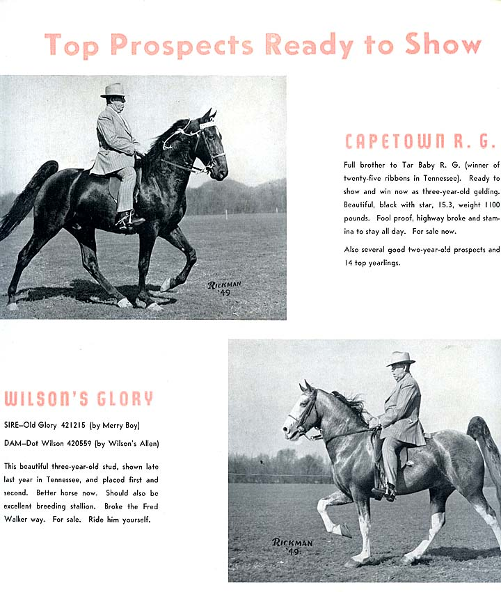History Of The Tennessee Walking Horse - Page 7 RiverGrangeFarmAd