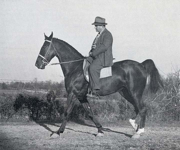 History Of The Tennessee Walking Horse - Page 7 SWBeechSronearlyTWH