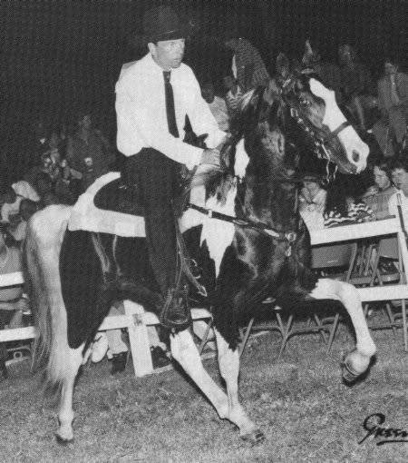 The BEST of Walking Horse Trivia! - Page 23 Sammyonspotted