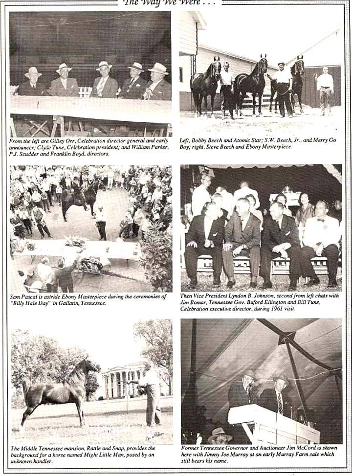 History Of The Tennessee Walking Horse - Page 7 TheWayWeWere1
