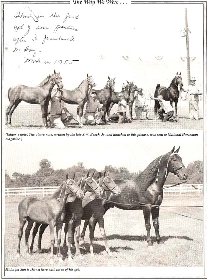 History Of The Tennessee Walking Horse - Page 7 TheWayWeWere2