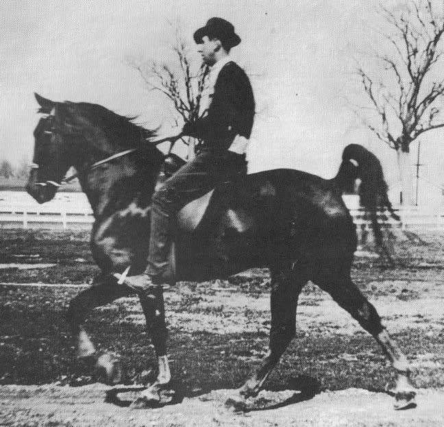 The BEST of Walking Horse Trivia! - Page 23 Awho122