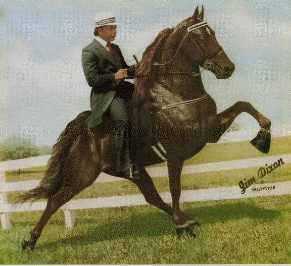 The BEST of Walking Horse Trivia! - Page 23 Awho4