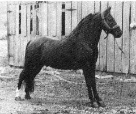 The BEST of Walking Horse Trivia! - Page 23 Awho9