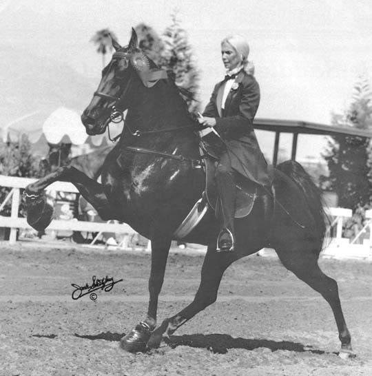 The BEST of Walking Horse Trivia! - Page 23 Missing1