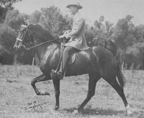 The BEST of Walking Horse Trivia! - Page 23 Missing2