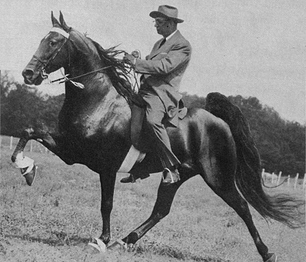 The BEST of Walking Horse Trivia! - Page 23 Missing4