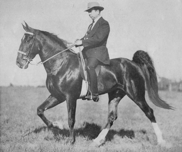 The BEST of Walking Horse Trivia! - Page 23 Missing5
