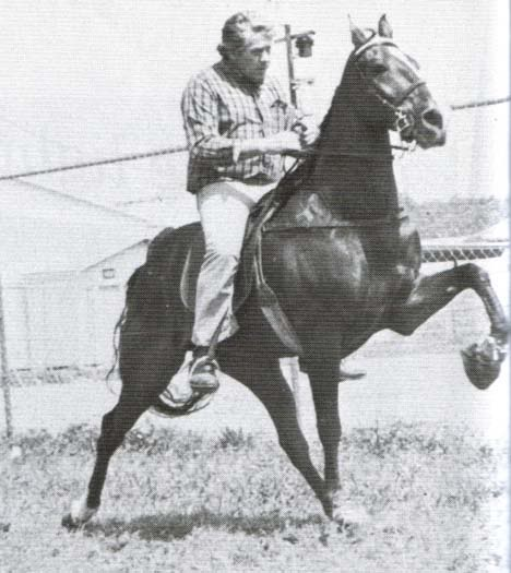 The BEST of Walking Horse Trivia! - Page 23 Missing6-1