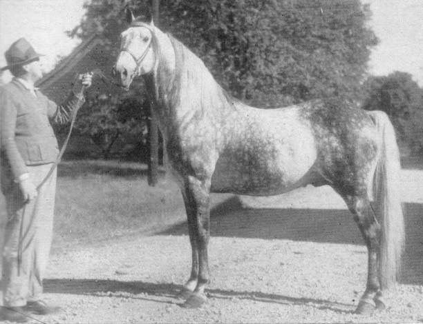 The BEST of Walking Horse Trivia! - Page 23 Missing6