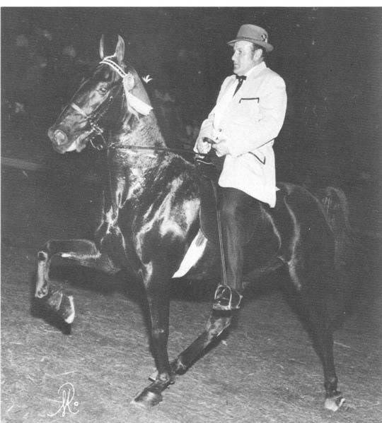 The BEST of Walking Horse Trivia! - Page 23 Missing7