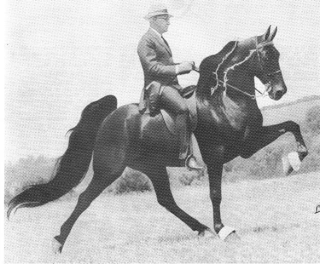 The BEST of Walking Horse Trivia! - Page 25 Who1-9