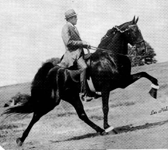 The BEST of Walking Horse Trivia! - Page 23 Who13-2