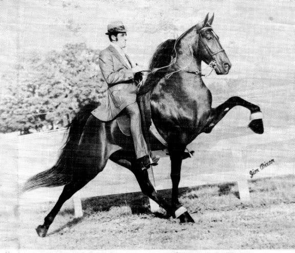 The BEST of Walking Horse Trivia! - Page 23 Who2-13