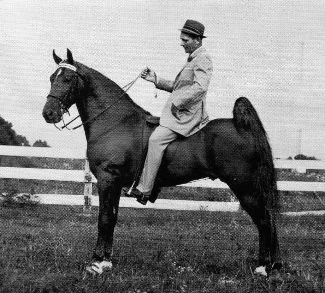 The BEST of Walking Horse Trivia! - Page 25 Whodat