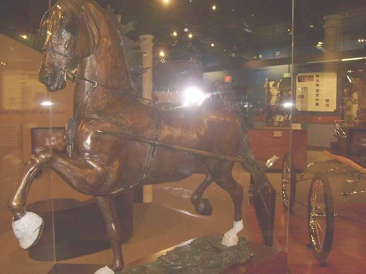 The BEST of Walking Horse Trivia! - Page 25 S6300350