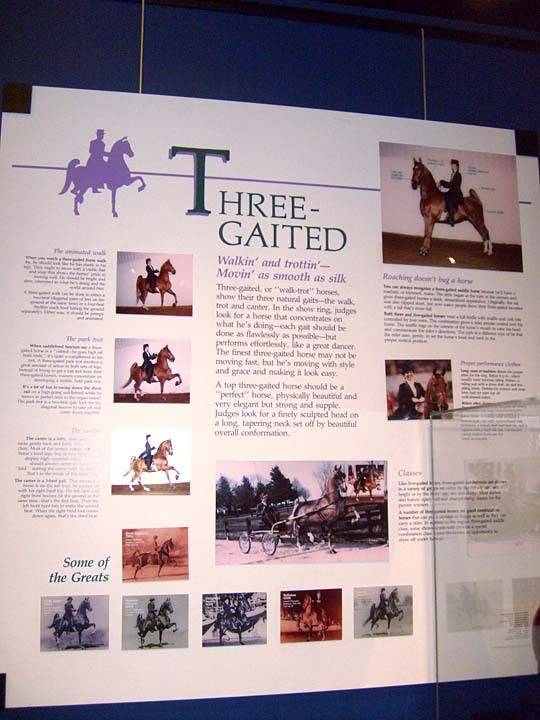 The BEST of Walking Horse Trivia! - Page 25 S6300366