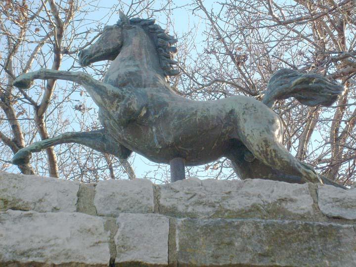Equine Art Stallion1