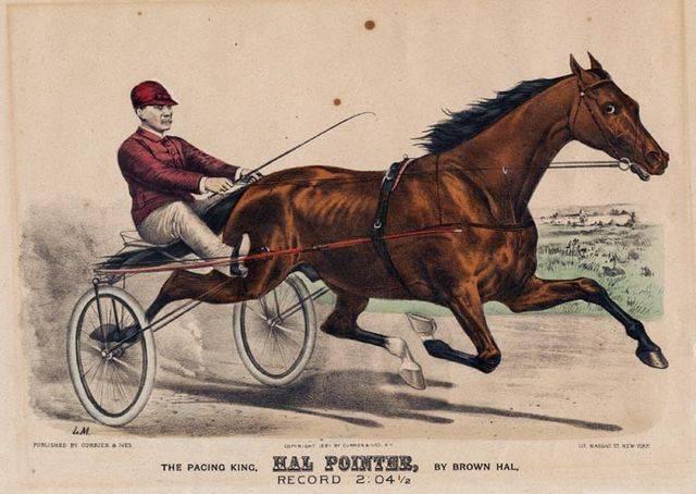 Equine Art - Page 6 Horse_Hal_Pointer-big_zps0ea03f41
